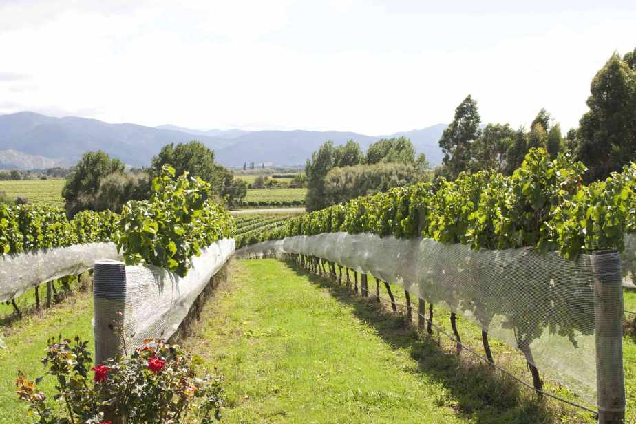 Look out for New Zealand red wines when shopping for something new